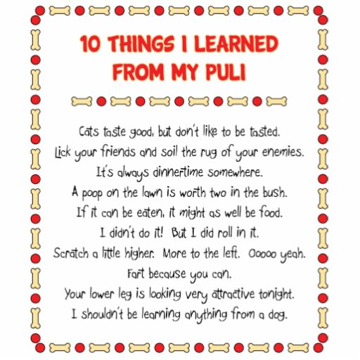 Funny Things I Learned From My Puli Cut Outs
