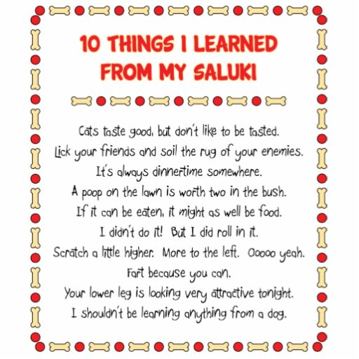 Funny Things I Learned From My Saluki Acrylic Cut Outs