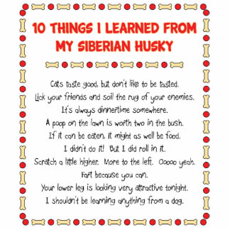 Funny Things I Learned From My Siberian Husky Photo Sculptures