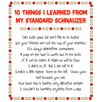 Funny Things I Learned From My Standard Schnauzer Standing Photo Sculpture