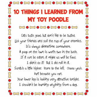 Funny Things I Learned From My Toy Poodle Photo Sculptures