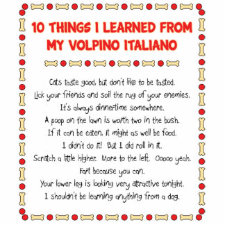 Funny Things I Learned From My Volpino Italiano Cut Out