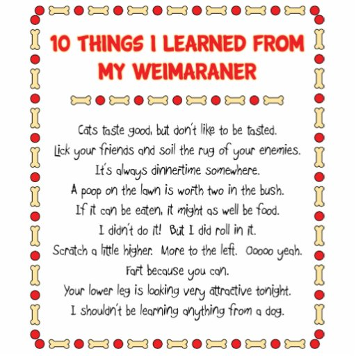 Funny Things I Learned From My Weimaraner Cut Outs