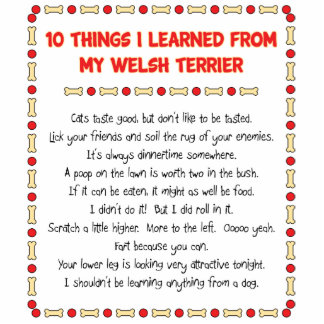 Funny Things I Learned From My Welsh Terrier Cut Out