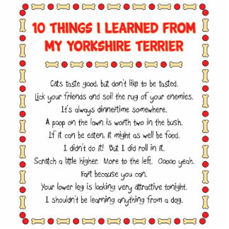 Funny Things I Learned From My Yorkshire Terrier Photo Cut Out