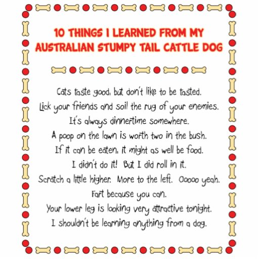 Funny Things I Learned From Stumpy Tail Cattle Dog Photo Cut Out