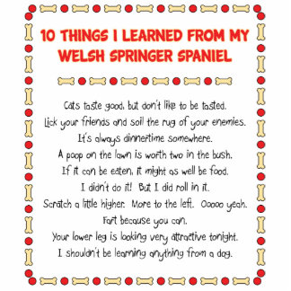 Funny Things I Learned From Welsh Springer Spaniel Acrylic Cut Outs