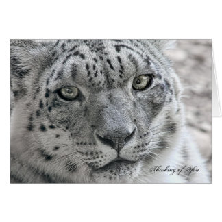 Funny Thinking of You Card Hungry Snow Leopard