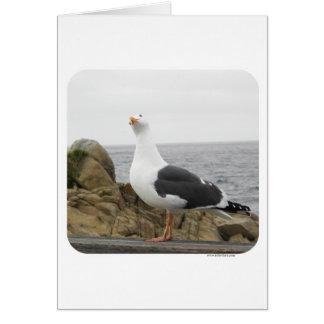 Funny Tilt Head Seagull Greeting Card