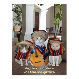 Funny Tres Gatos Spanish Teaching Aid Postcard