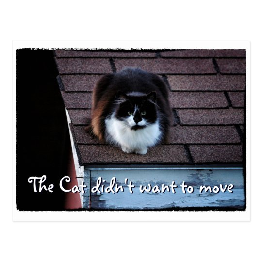 Funny Tuxedo Cat on Roof Moving Announcement Postcard