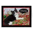 Funny Tuxedo Kitten Cat Christmas Card
