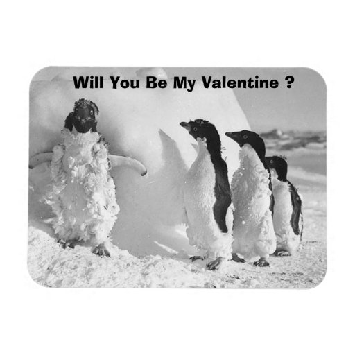 Funny Valentines Day Penguin Rectangle Magnets