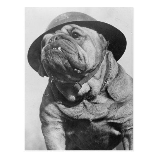 Funny Vintage Dog Wearing Military Helmet Postcard