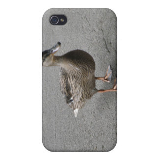 Funny Waddling Duck  iPhone 4/4S Case