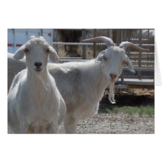 Funny Western Congratulations Goat Greeting Card