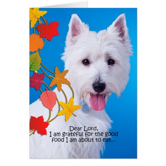Funny Westie Thanksgiving Card