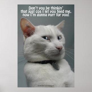 Funny White Cat Humor Pet-lover's Poster