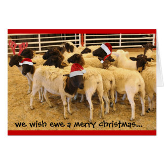 Funny, Wish Ewe a Merry Christmas, no BAA humbugs Greeting Card