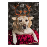 Funny Yellow Lab Christmas cards