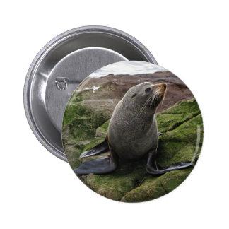 Fur Seal 6 Cm Round Badge