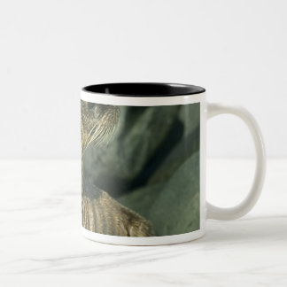 Fur Seal, Arctocephalus galapagoensis), young Two-Tone Coffee Mug