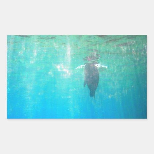 Fur Seal Rectangle Sticker