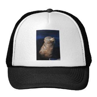 Fur seal sunbathing Wairarapa Cap