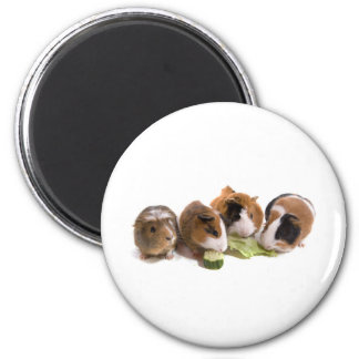 furnace guinea pigs who eat, 6 cm round magnet