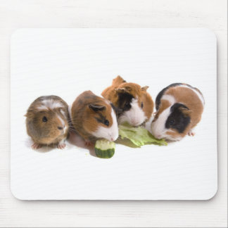 furnace guinea pigs who eat, mouse mat