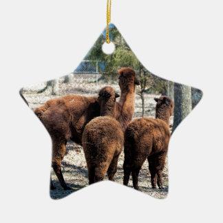 Furry Brown Alpaca Behinds Ceramic Star Decoration