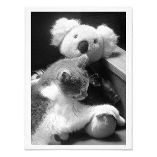 """Furry Friends"" Cat & Koala Photography Print Photo Art"