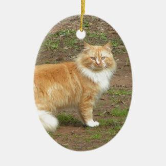 Furry Orange and White Cat Ceramic Oval Decoration