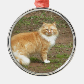 Furry Orange and White Cat Silver-Colored Round Decoration