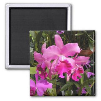Fuschia Orchid Magnet