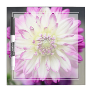 Fuschia Pink and White Dahlia Flower Dry Erase Board