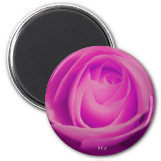 Fuschia Rose, S Cyr Fridge Magnets