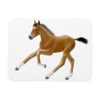 Future Champion Bay Foal Premium Magnet
