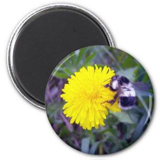 Fuzzy Bee Magnet