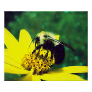 Fuzzy Bumblebee Poster Poster