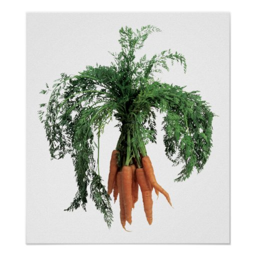 Fuzzy Carrot Poster