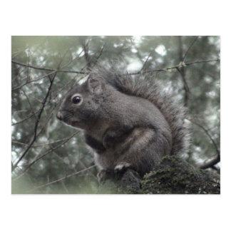 Fuzzy on Stump Postcard
