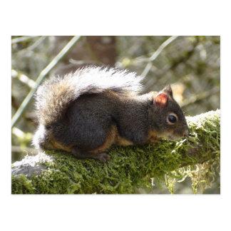 Fuzzy on Tree Limb Postcard