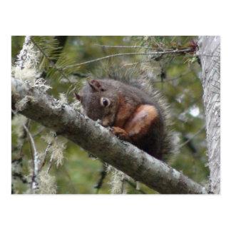 Fuzzy Sleeping on Tree Limb Postcard