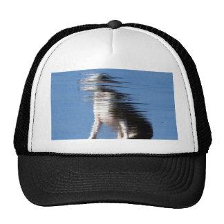 Fuzzydog Cap