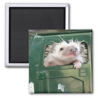 G.I. Hedgehog Square Magnet