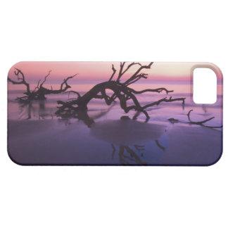 GA Jekyll Island, Tree graveyard on  beach at iPhone 5 Covers