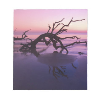 GA Jekyll Island, Tree graveyard on  beach at Notepads