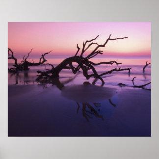GA Jekyll Island, Tree graveyard on  beach at Poster