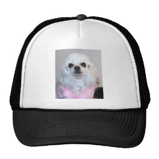 Gabby white poodle fancy dressed in Pink Trucker Hats